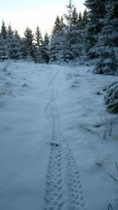 Frosne stier med et tynt snølag gir mye moro!